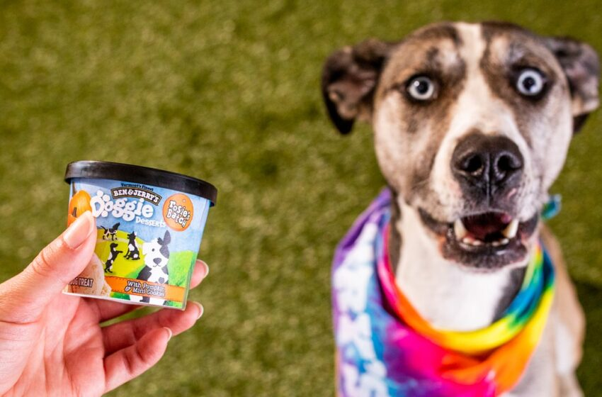 Ben & Jerry's ha fatto i gelati per i cani!